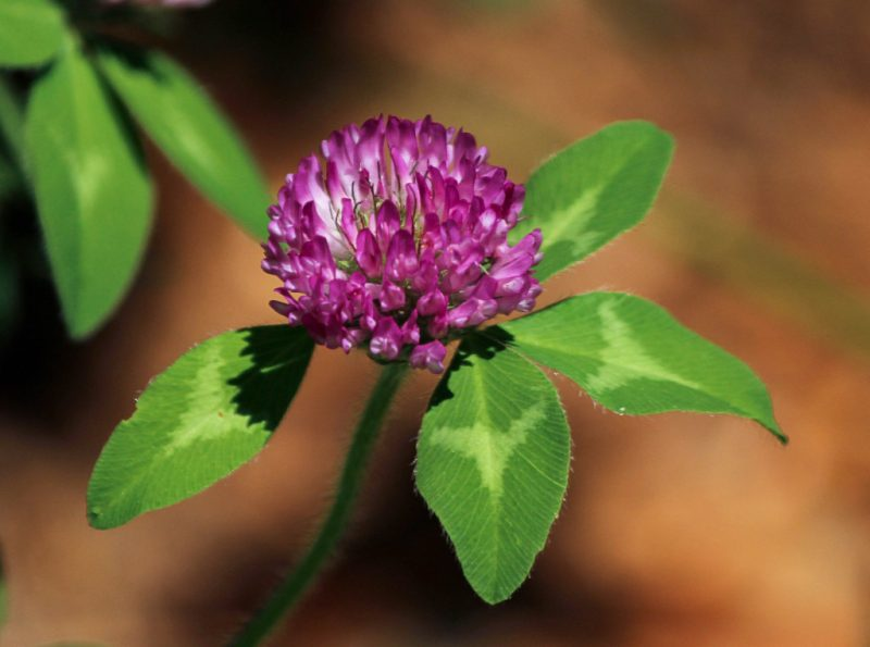 В составе растения есть много биологических компонентов