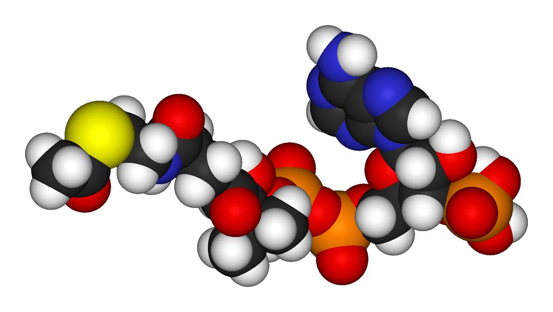 Холестерол помогает производить надпочечниками синтез групп гормонов