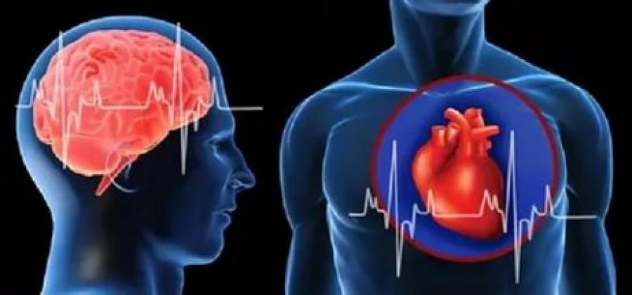Инфаркт миокарда и мозговой инсульт