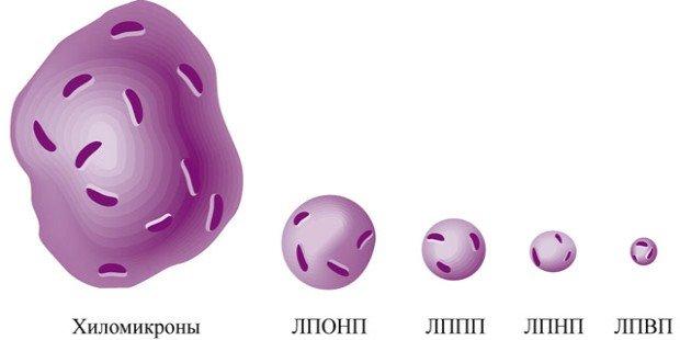 Виды молекул холестерина в организме