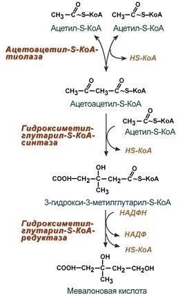 Реакции синтеза мевалоновой кислоты
