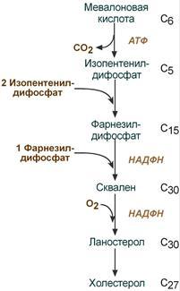Схема реакций синтеза холестерола