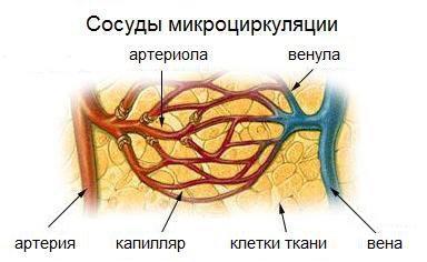 сосуды микроциркуляции
