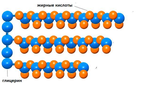 Молекула триглицерида - это сложные липидное соединение