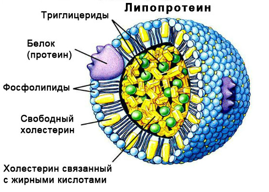 Ядро липопротеида